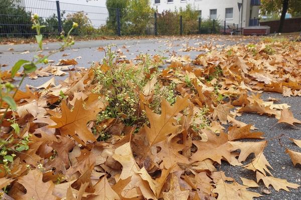 Herbstlicher Randstein......