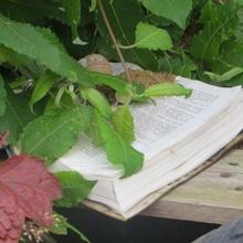 Buch und Natur