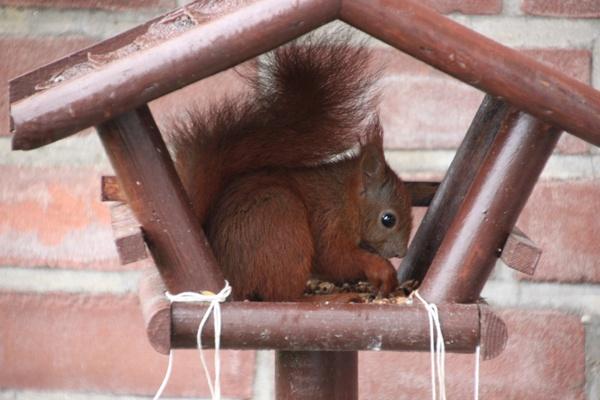 Eichhörnchen statt Vogel