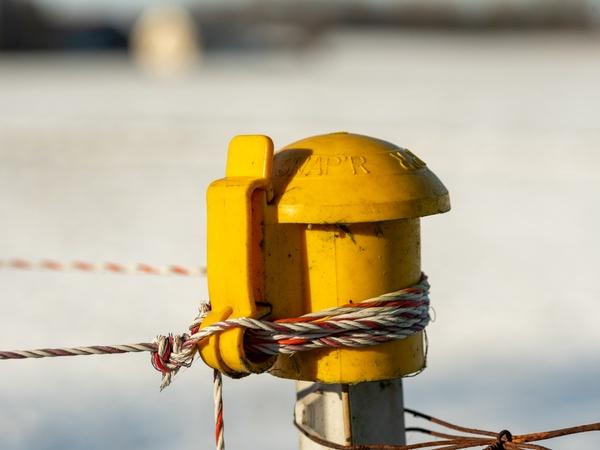 Yellow Strom ???