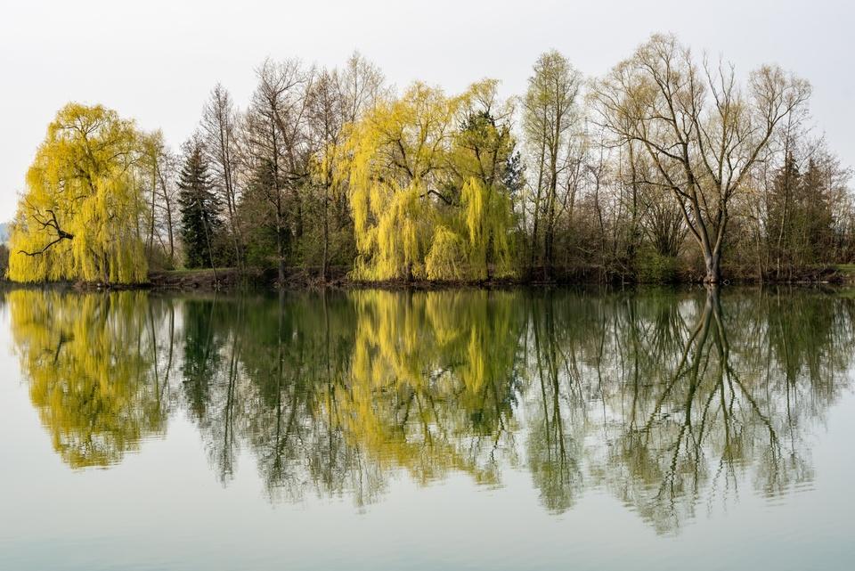 Frühlingsgrün am Weiher