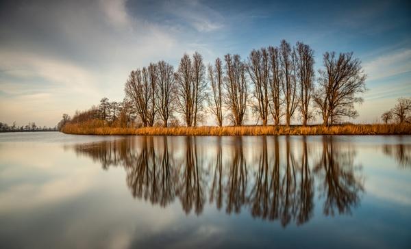 Baumgruppe im Spiegel