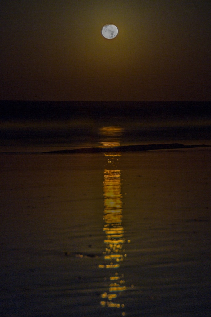 Der Frühe Vogel kann den Monduntergang sehen