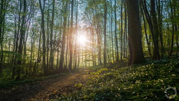 Lensflaire beim Sonnenaufgang im Wald