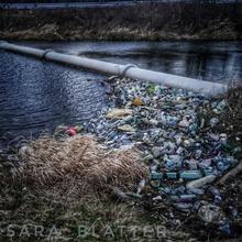 Müll im Altrhein