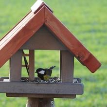 Kohlmeise im Vogelhaus