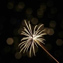 Feuerwerksblume