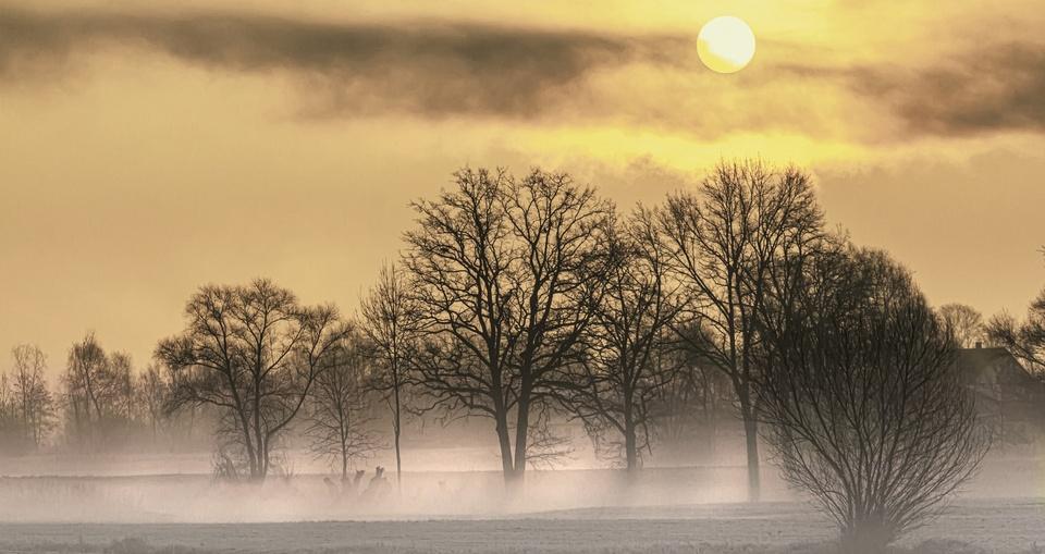 Morgensonne und Nebel