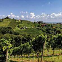 Südsteiermark Weinland