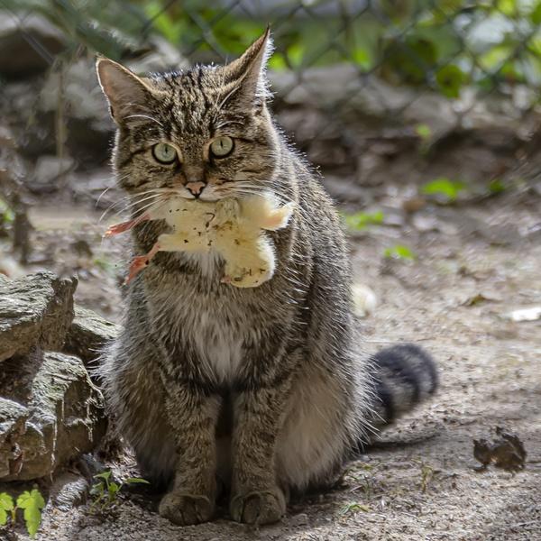 Mein Picknick