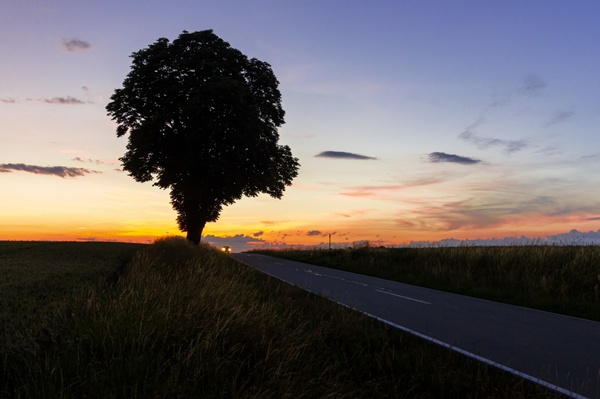 Baum nach Sonnenuntergang