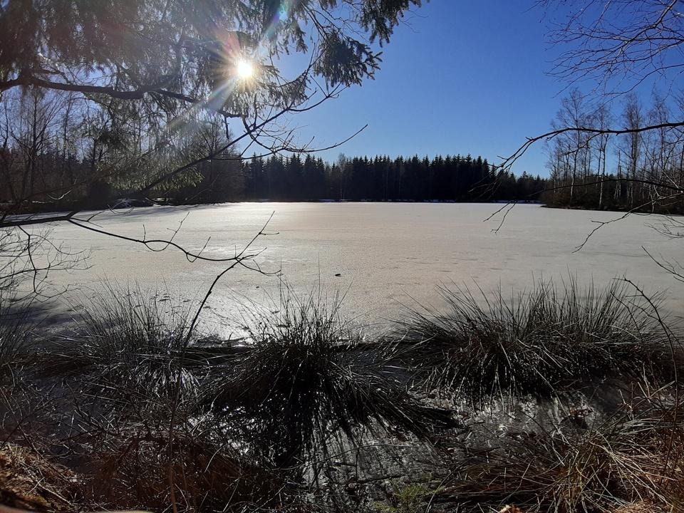 gefrorener Teich bei schönstem Sonnenschein