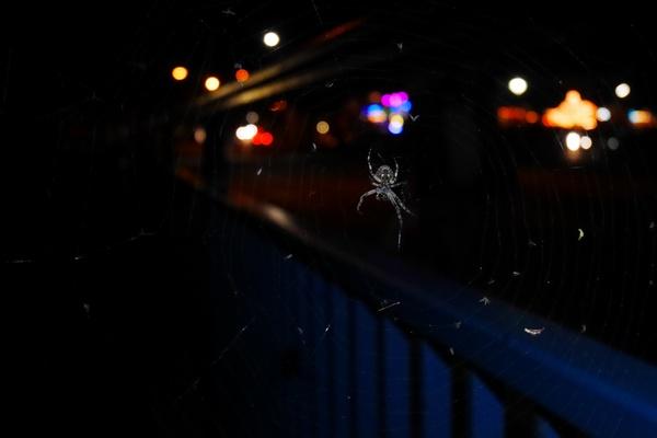 Spinnenleben