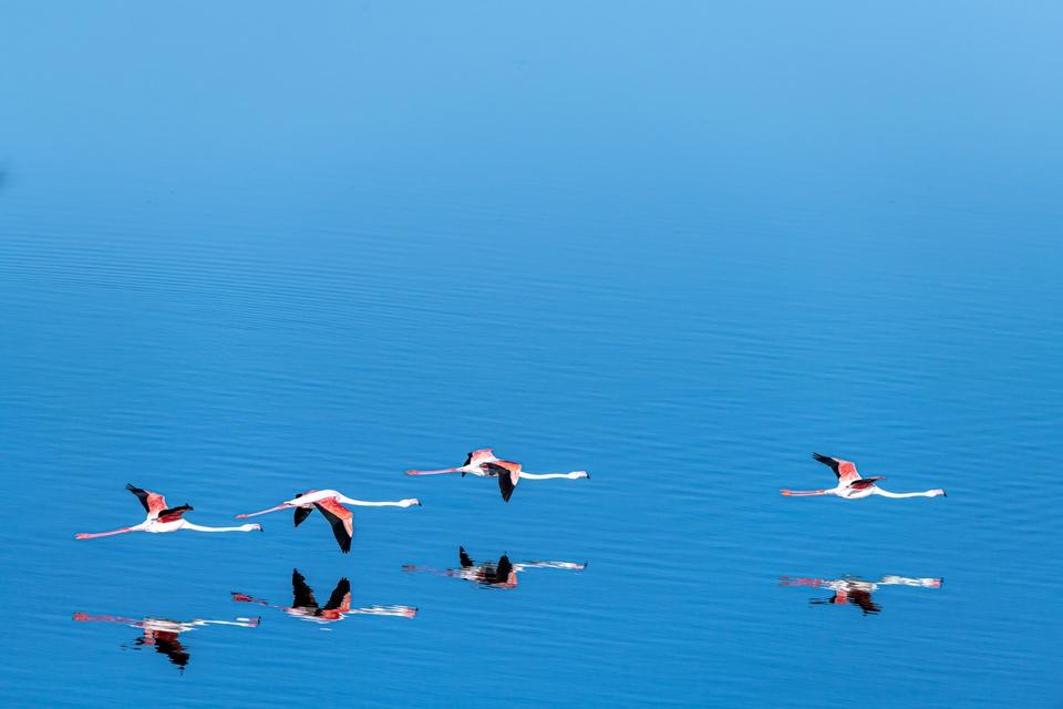 Flamingo-Verfolgung