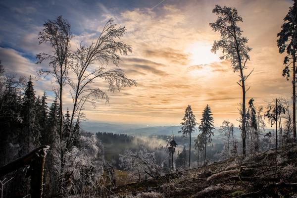 Winteranfang im Märchenwald