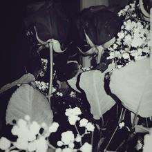 RFM [Roses for mom]