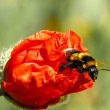 Fleißbienchen ;)