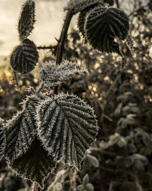 Winterblätter
