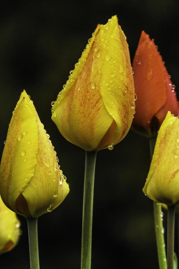 ...nach dem Regen