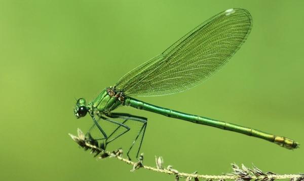 Grünes Juwel