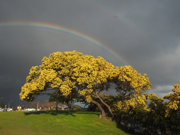 Der Regenbogenbaum