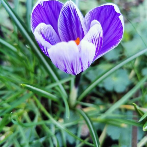 Frühlingszauber