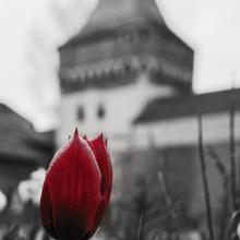 Tulpenmonat April