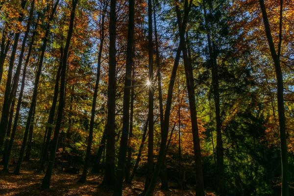 Herbststern