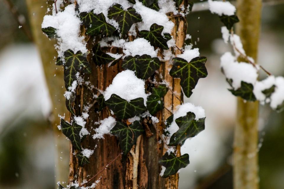 Schnee durch den Wald