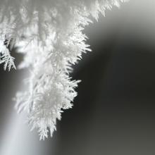 Schneezapfen