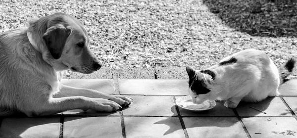 Wie Hund und Katze...