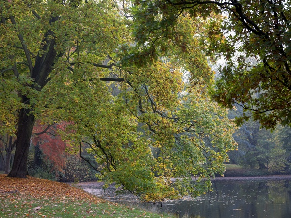 Teich im Johannapark