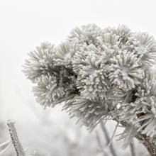 Frostiger Baum