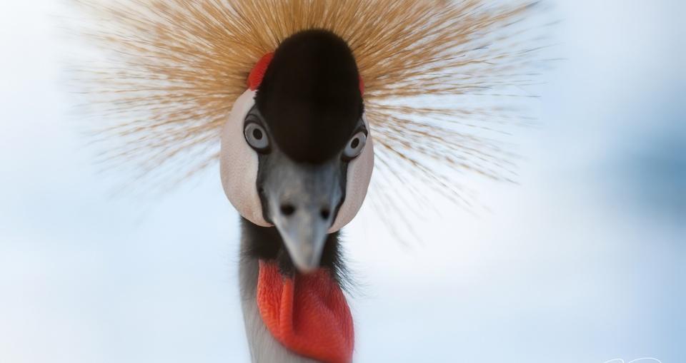 Vogel mit Designerhut