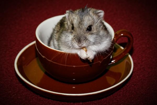 Oh oh - in der Tasse isst man nicht!