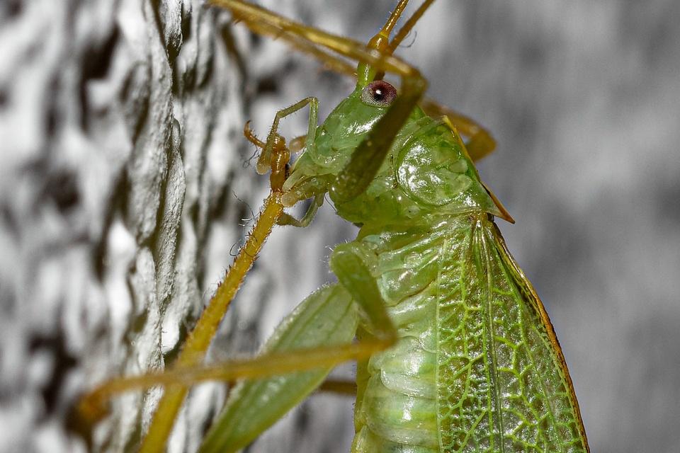 Grünes Insekt knabbert sein Füßchen