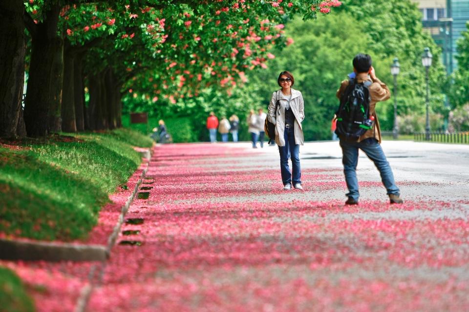 Blütenregen