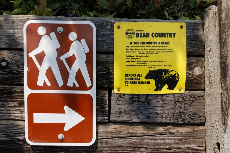 Rückwärts zu den Bären