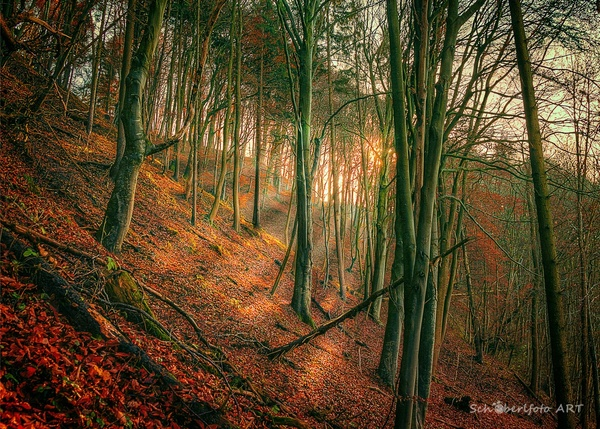 Roter Wald