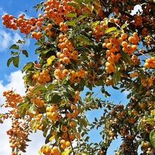 Fruchtiger Spätsommer